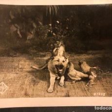Cine: FOTO ORIGINAL DEPARTAMENTO EDUCATIVO UFA.PERRO WOLFY CON MONO Y GALLINAS 18 X 13 CM. Lote 191295057