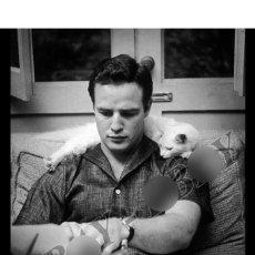 Cine: MARLON BRANDO GATO WITH CAT PHOTO FOTO. Lote 197375973