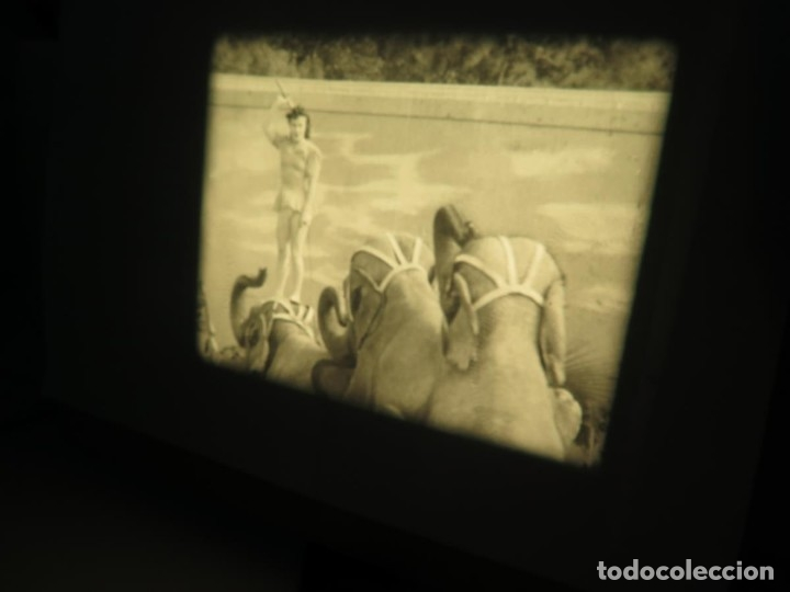 Cine: CLYDE BEATTYS-ANIMAL THRILLS, PELÍCULA 16MM-OLD MOVIE-RETRO - VINTAGE FILM - Foto 25 - 172203104