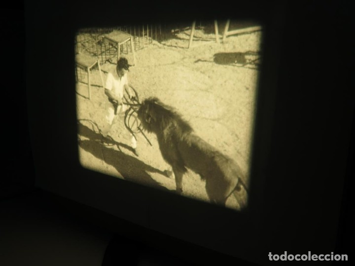 Cine: CLYDE BEATTYS-ANIMAL THRILLS, PELÍCULA 16MM-OLD MOVIE-RETRO - VINTAGE FILM - Foto 40 - 172203104