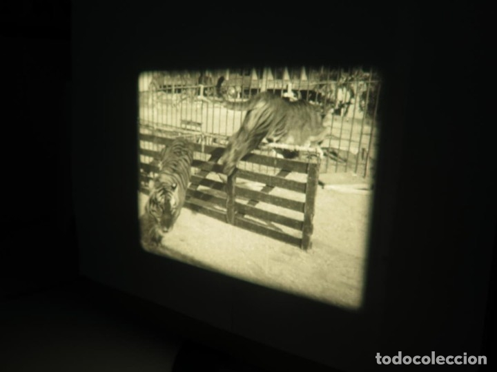Cine: CLYDE BEATTYS-ANIMAL THRILLS, PELÍCULA 16MM-OLD MOVIE-RETRO - VINTAGE FILM - Foto 48 - 172203104