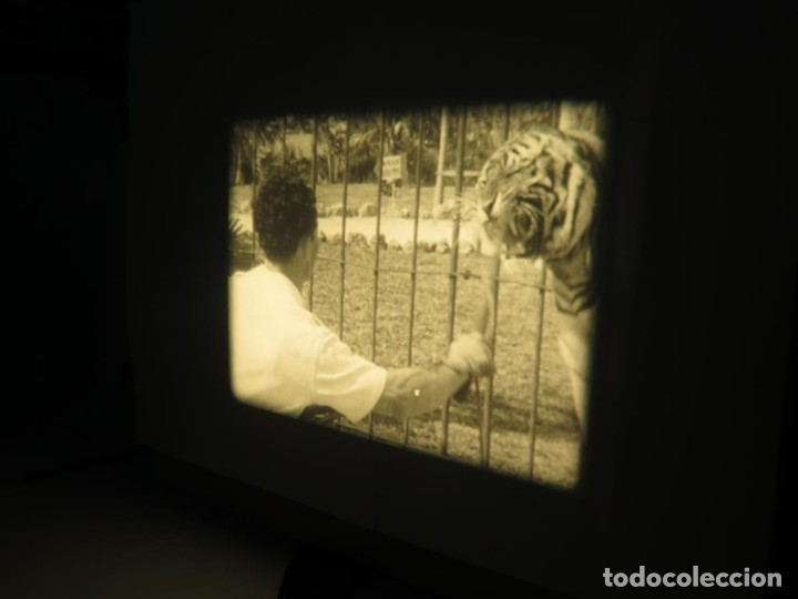 Cine: CLYDE BEATTYS-ANIMAL THRILLS, PELÍCULA 16MM-OLD MOVIE-RETRO - VINTAGE FILM - Foto 58 - 172203104