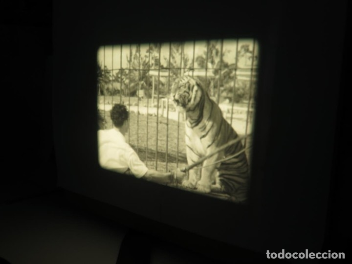 Cine: CLYDE BEATTYS-ANIMAL THRILLS, PELÍCULA 16MM-OLD MOVIE-RETRO - VINTAGE FILM - Foto 66 - 172203104