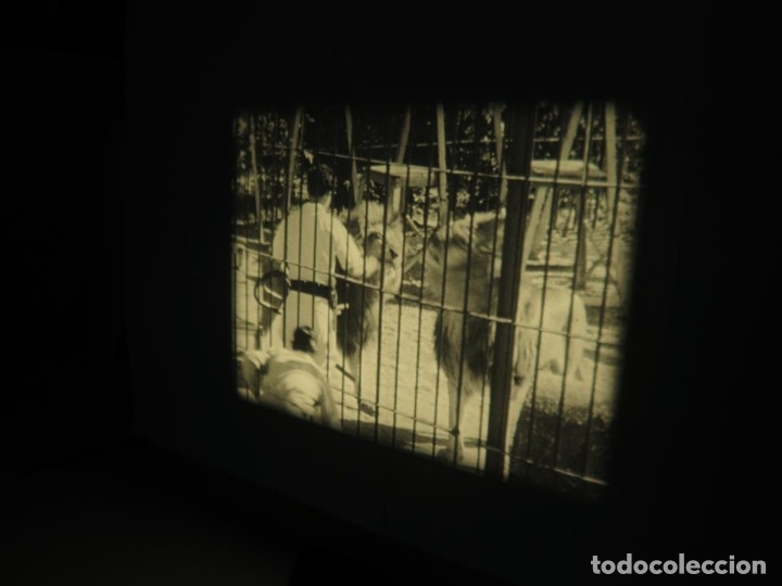 Cine: CLYDE BEATTYS-ANIMAL THRILLS, PELÍCULA 16MM-OLD MOVIE-RETRO - VINTAGE FILM - Foto 70 - 172203104