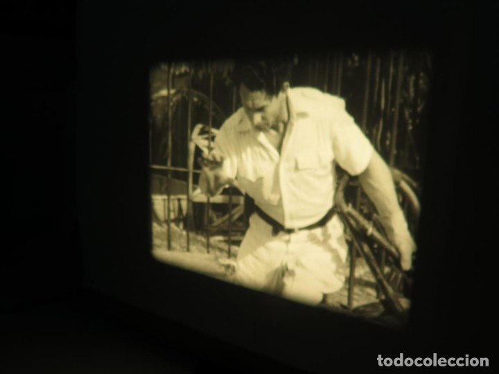 Cine: CLYDE BEATTYS-ANIMAL THRILLS, PELÍCULA 16MM-OLD MOVIE-RETRO - VINTAGE FILM - Foto 87 - 172203104