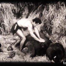 Cine: TARZAN Y LA SELVA ESCONDIDA (1955, GORDON SCOTT Y VERA MILES / V.O INGLÉS) NUEVA. Lote 184583315