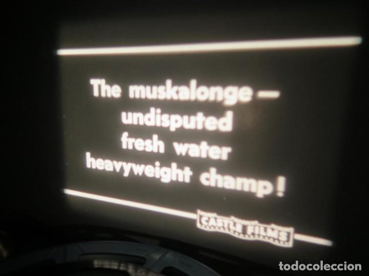 Cine: FISHING THRILLS (EMOCIONES DE PESCA) DOCUMENTAL 16 MM -MUDO - RETRO VINTAGE FILM - Foto 12 - 193341708
