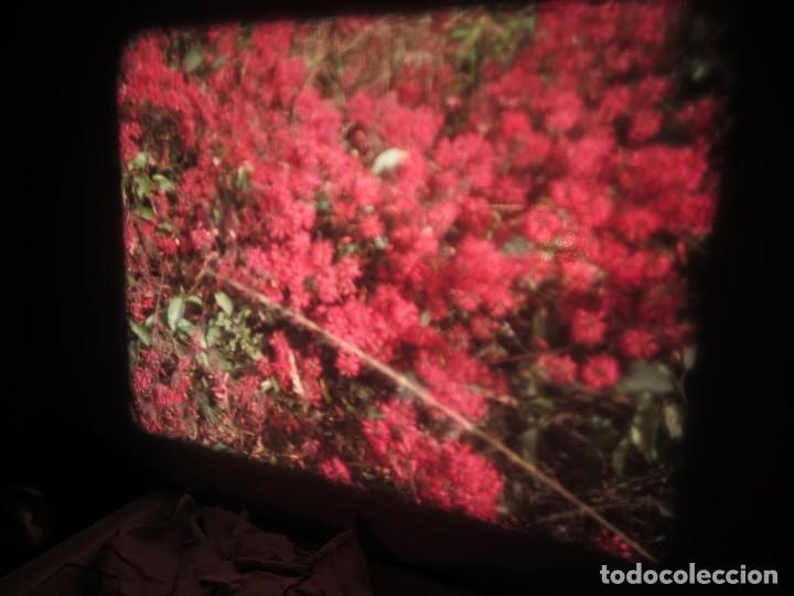Cine: ANTIGUA BOBINA PELÍCULA-FILMACIONES -AMATEUR-SIERRA LEONA-AÑOS 80 16 MM, RETRO VINTAGE FILM - Foto 16 - 194300253