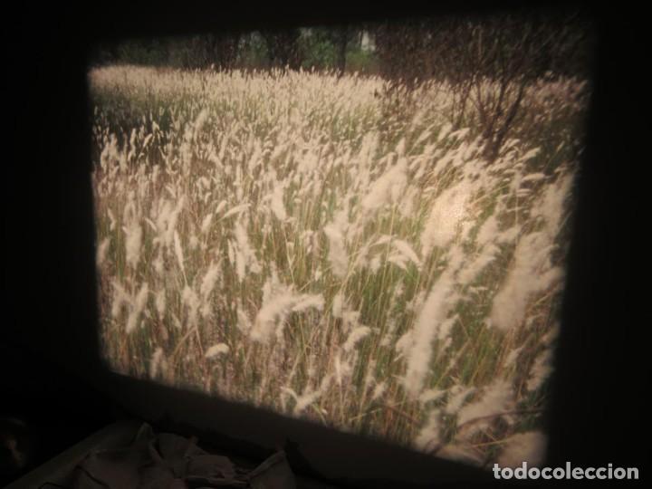 Cine: ANTIGUA BOBINA PELÍCULA-FILMACIONES -AMATEUR-SIERRA LEONA-AÑOS 80 16 MM, RETRO VINTAGE FILM - Foto 29 - 194300253