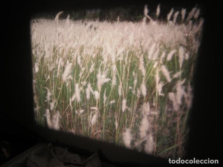 Cine: ANTIGUA BOBINA PELÍCULA-FILMACIONES -AMATEUR-SIERRA LEONA-AÑOS 80 16 MM, RETRO VINTAGE FILM - Foto 31 - 194300253