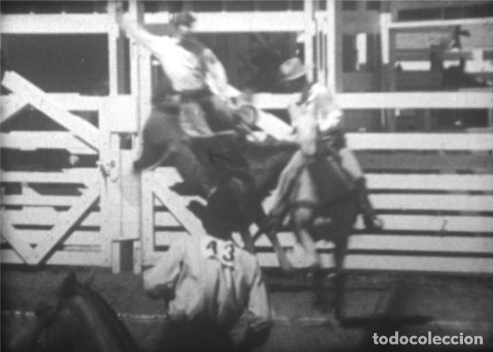 Cine: CABALLOS Y MÁS, AÑOS 50 EE.UU. Película de cine de 16 mm, con imágenes de caballos y otros animales. - Foto 9 - 184727928