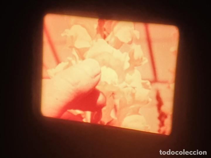 Cine: LA MATERIA,LA POLINIZACIÓN DE LAS FLORES (DOCUMENTALES)16 MM- 1 x 300 MTS. RETRO-VINTAGE FILM - Foto 39 - 207295568