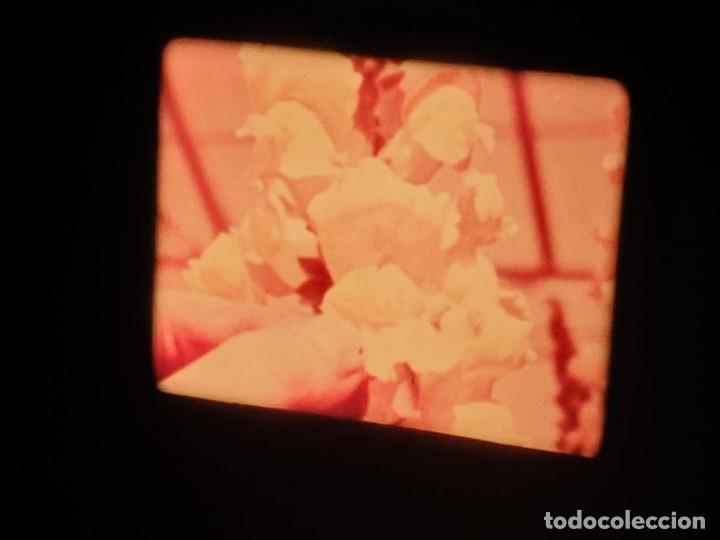 Cine: LA MATERIA,LA POLINIZACIÓN DE LAS FLORES (DOCUMENTALES)16 MM- 1 x 300 MTS. RETRO-VINTAGE FILM - Foto 40 - 207295568