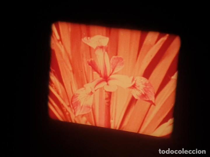 Cine: LA MATERIA,LA POLINIZACIÓN DE LAS FLORES (DOCUMENTALES)16 MM- 1 x 300 MTS. RETRO-VINTAGE FILM - Foto 41 - 207295568