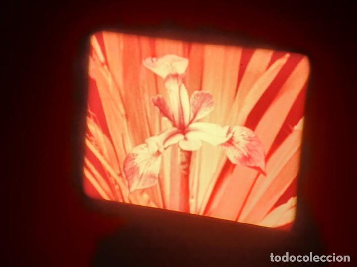 Cine: LA MATERIA,LA POLINIZACIÓN DE LAS FLORES (DOCUMENTALES)16 MM- 1 x 300 MTS. RETRO-VINTAGE FILM - Foto 42 - 207295568