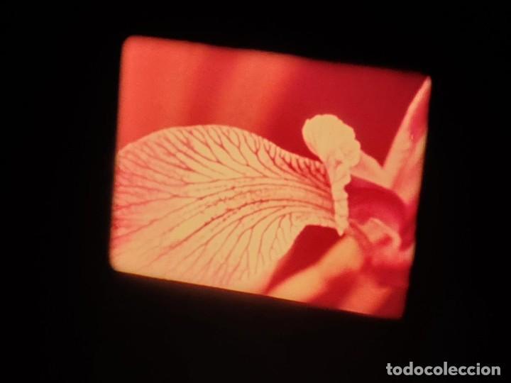 Cine: LA MATERIA,LA POLINIZACIÓN DE LAS FLORES (DOCUMENTALES)16 MM- 1 x 300 MTS. RETRO-VINTAGE FILM - Foto 44 - 207295568