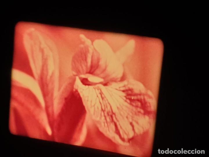 Cine: LA MATERIA,LA POLINIZACIÓN DE LAS FLORES (DOCUMENTALES)16 MM- 1 x 300 MTS. RETRO-VINTAGE FILM - Foto 45 - 207295568