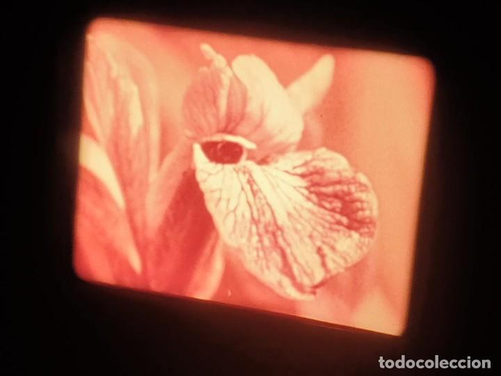 Cine: LA MATERIA,LA POLINIZACIÓN DE LAS FLORES (DOCUMENTALES)16 MM- 1 x 300 MTS. RETRO-VINTAGE FILM - Foto 46 - 207295568