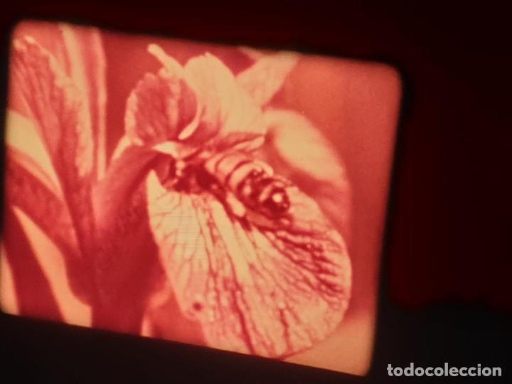 Cine: LA MATERIA,LA POLINIZACIÓN DE LAS FLORES (DOCUMENTALES)16 MM- 1 x 300 MTS. RETRO-VINTAGE FILM - Foto 47 - 207295568