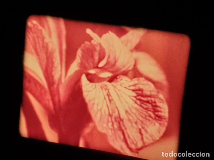Cine: LA MATERIA,LA POLINIZACIÓN DE LAS FLORES (DOCUMENTALES)16 MM- 1 x 300 MTS. RETRO-VINTAGE FILM - Foto 48 - 207295568