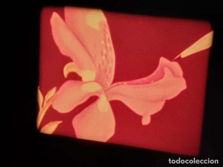 Cine: LA MATERIA,LA POLINIZACIÓN DE LAS FLORES (DOCUMENTALES)16 MM- 1 x 300 MTS. RETRO-VINTAGE FILM - Foto 50 - 207295568