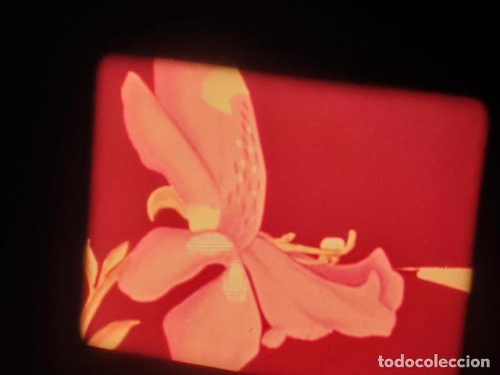 Cine: LA MATERIA,LA POLINIZACIÓN DE LAS FLORES (DOCUMENTALES)16 MM- 1 x 300 MTS. RETRO-VINTAGE FILM - Foto 52 - 207295568