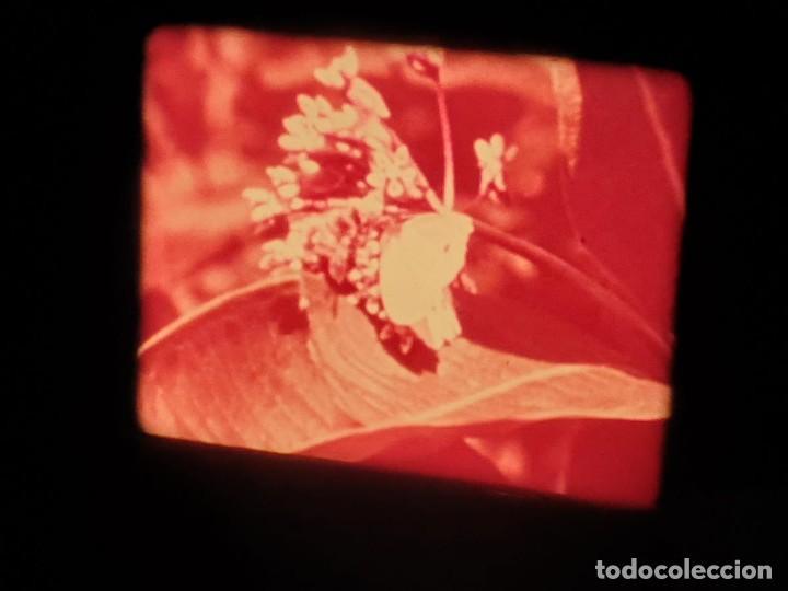 Cine: LA MATERIA,LA POLINIZACIÓN DE LAS FLORES (DOCUMENTALES)16 MM- 1 x 300 MTS. RETRO-VINTAGE FILM - Foto 54 - 207295568
