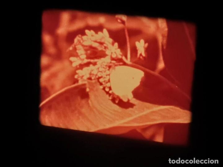 Cine: LA MATERIA,LA POLINIZACIÓN DE LAS FLORES (DOCUMENTALES)16 MM- 1 x 300 MTS. RETRO-VINTAGE FILM - Foto 55 - 207295568
