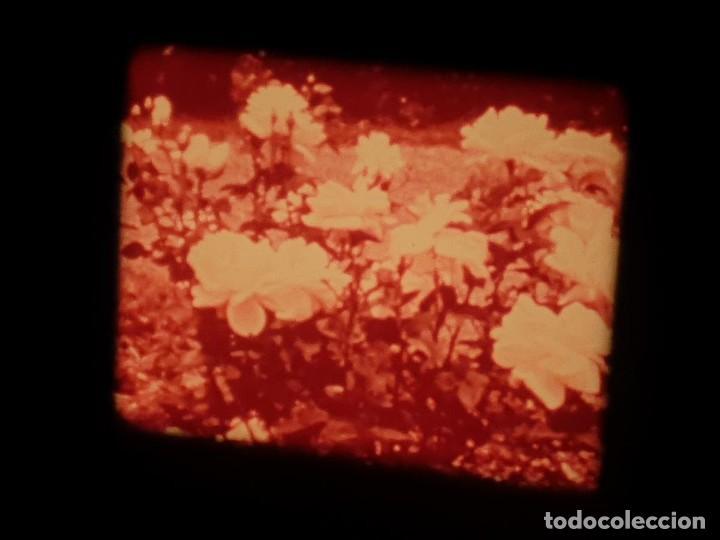 Cine: LA MATERIA,LA POLINIZACIÓN DE LAS FLORES (DOCUMENTALES)16 MM- 1 x 300 MTS. RETRO-VINTAGE FILM - Foto 62 - 207295568