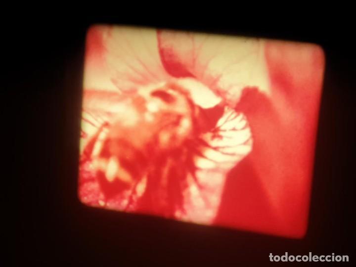 Cine: LA MATERIA,LA POLINIZACIÓN DE LAS FLORES (DOCUMENTALES)16 MM- 1 x 300 MTS. RETRO-VINTAGE FILM - Foto 71 - 207295568