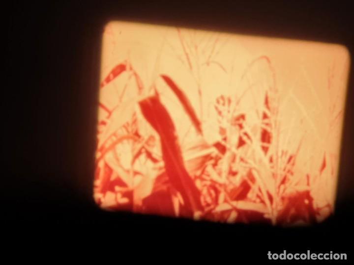 Cine: LA MATERIA,LA POLINIZACIÓN DE LAS FLORES (DOCUMENTALES)16 MM- 1 x 300 MTS. RETRO-VINTAGE FILM - Foto 73 - 207295568