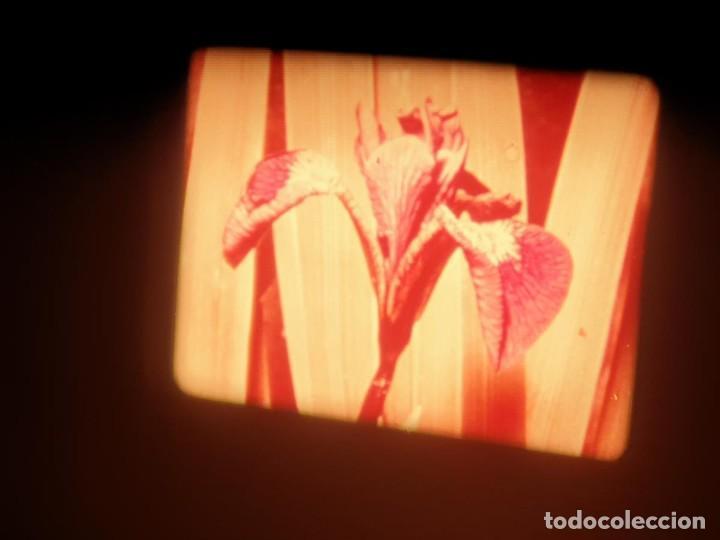 Cine: LA MATERIA,LA POLINIZACIÓN DE LAS FLORES (DOCUMENTALES)16 MM- 1 x 300 MTS. RETRO-VINTAGE FILM - Foto 75 - 207295568