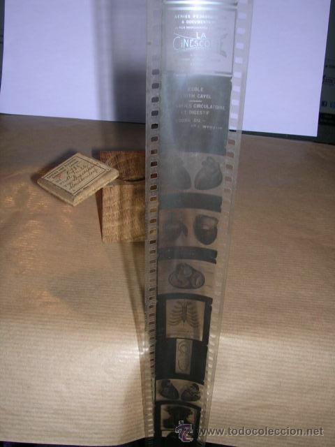 Cine: PELICULA 285 LA CINESCOPIE SERIES PEDAGOGIQUES & DOCUMENTAIRES , ECOLE EDITH CAVEL APPAREILLE CIRCUL - Foto 3 - 32337133