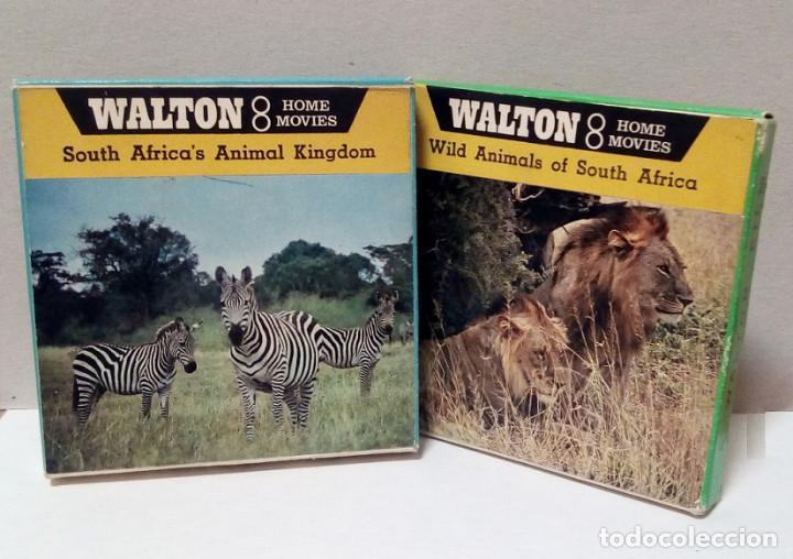 LOTE PELÍCULAS 8 MM - WALTON 8 - ANIMALES (Cine - Películas - 8 mm)