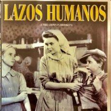 Cine: LAZOS HUMANOS/ A TREE GROWS IN BROOKLYN)- UN FILM DE ELIA KAZAN. Lote 80433793