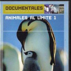 Cine - Animales al Límite 1. Temperaturas extremas - 107807459