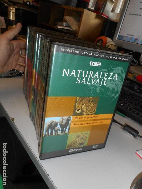 Cine: naturaleza salvaje bbc 19 dvd - Foto 2 - 130596250