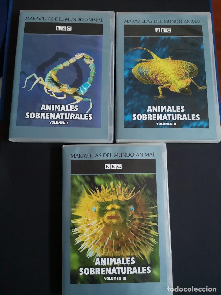 BBC 3 DVD ANIMALES SOBRENATURALES NUEVOS (Cine - Películas - DVD)