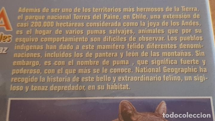 Cine: PUMA / EL LEÓN DE LOS ANDES / NATIONAL GEOGRAPHIC / DVD - PRECINTADO. - Foto 2 - 178895330