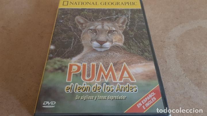PUMA / EL LEÓN DE LOS ANDES / NATIONAL GEOGRAPHIC / DVD - PRECINTADO. (Cine - Películas - DVD)