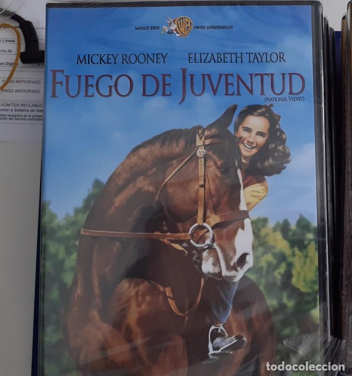 FUEGO DE JUVENTUD (Cine - Películas - DVD)