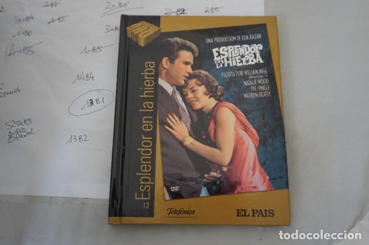 DVD + LIBRETO - ESPLENDOR EN LA HIERBA - / ELIA KAZAN (Cine - Películas - DVD)