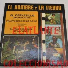 Cine: EL CERVATILLO - 2ª SEGUNDA PARTE - FÉLIX RODRÍGUEZ DE LA FUENTE - R.T.V.E - EL HOMBRE Y LA TIERRA. Lote 47168597