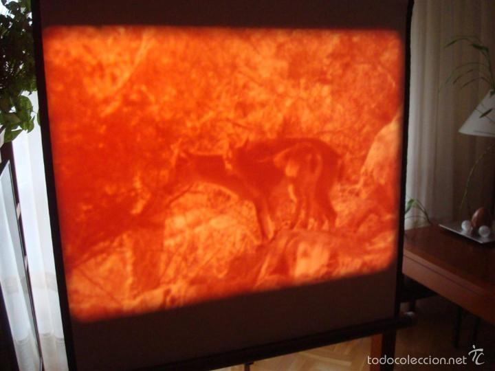 Cine: PRISIONEROS DEL BOSQUE-CORTOMETRAJE-SUPER 8 MM –VINTAGE FILM - Foto 5 - 56716728