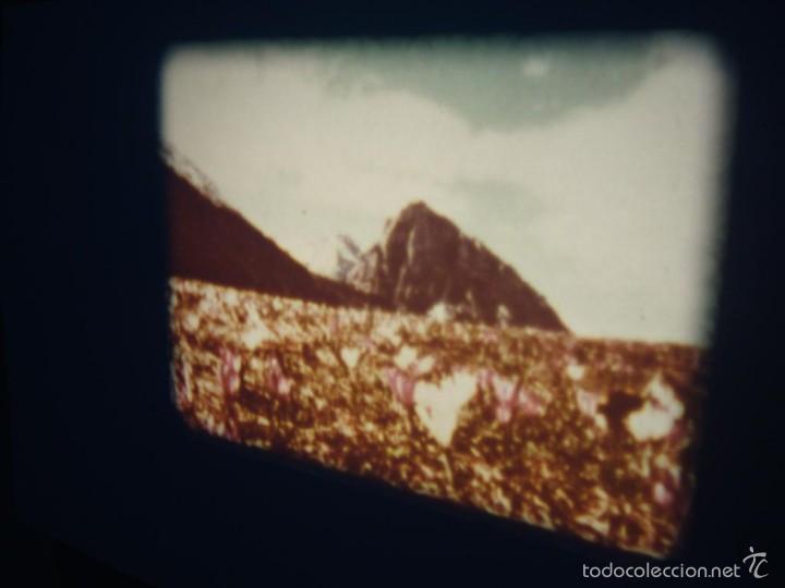 Cine: FAUNA ALPINA II CORTOMETRAJE-SUPER 8 MM –VINTAGE FILM - Foto 3 - 57283904