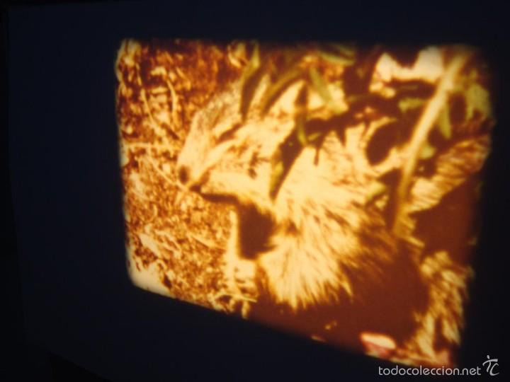 Cine: FAUNA ALPINA II CORTOMETRAJE-SUPER 8 MM –VINTAGE FILM - Foto 4 - 57283904