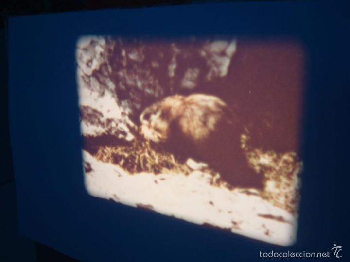 Cine: FAUNA ALPINA II CORTOMETRAJE-SUPER 8 MM –VINTAGE FILM - Foto 5 - 57283904