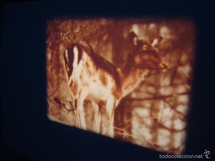 Cine: FAUNA ALPINA II CORTOMETRAJE-SUPER 8 MM –VINTAGE FILM - Foto 6 - 57283904