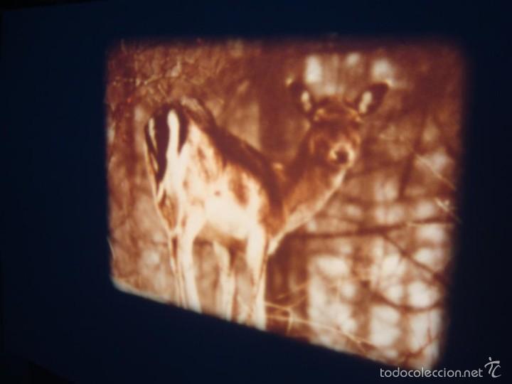 Cine: FAUNA ALPINA II CORTOMETRAJE-SUPER 8 MM –VINTAGE FILM - Foto 7 - 57283904