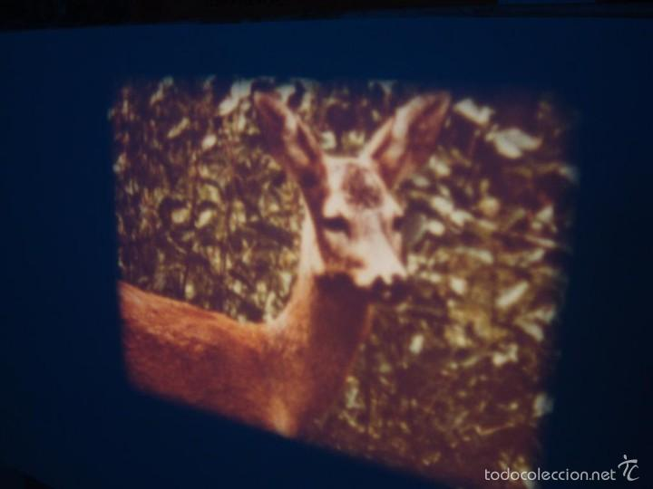 Cine: FAUNA ALPINA II CORTOMETRAJE-SUPER 8 MM –VINTAGE FILM - Foto 9 - 57283904